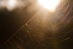 cobwebs Arkivbild