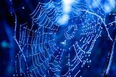 cobwebs stock afbeeldingen