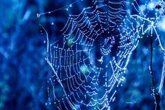 cobwebs royalty-vrije stock fotografie