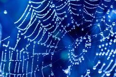 cobwebs stock afbeelding