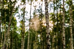 Cobwebs on a branch in a forest royalty free stock photography