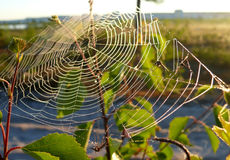 Cobwebs on the branch. The landscape of the Northern nature. Royalty Free Stock Photos