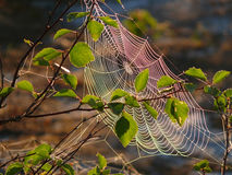 Cobwebs on the branch. The landscape of the Northern nature. Stock Photo
