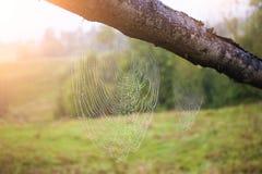 Cobwebs at dawn. Stock Photos