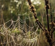 Cobwebs with dew drops on the grass.  Stock Image