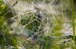 Cobwebs and dew. Morning dew drops on the web Stock Image