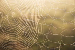 Cobwebs Royalty Free Stock Photo