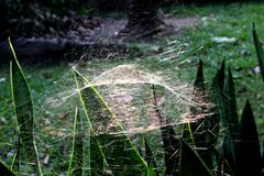 Cobwebs. Floating in the air Royalty Free Stock Images