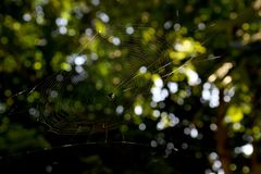 Cobwebs. Floating in the air Stock Image