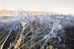 Cobwebs forming a silver thread structure Royalty Free Stock Photo