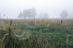 Cobwebs on the grass Stock Images
