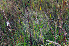 Cobwebs on the grass Stock Photography