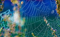 Cobwebs Stock Photo