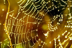 Cobwebs. On the grass with dew drops Stock Photos
