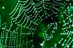 Cobwebs. On the grass with dew drops Royalty Free Stock Photos