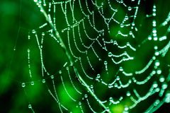 Cobwebs. On the grass with dew drops Royalty Free Stock Images