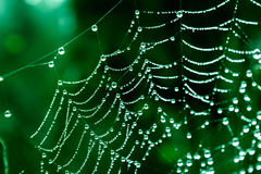 Cobwebs. On the grass with dew drops Stock Photo