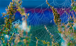 Cobwebs. On the grass with dew drops, Spider Web in forest Stock Photos