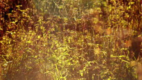 Cobwebs on the grass sways and shimmers in sunlight stock video footage