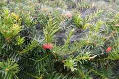 The cobwebs. Green plants with red flowers under the cobwebs Stock Photography