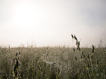 Cobwebs hanging on a plant Royalty Free Stock Images