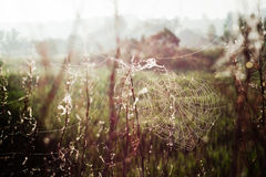 Cobwebs on meadow Royalty Free Stock Photography