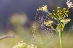 Cobwebs in the morning dew.