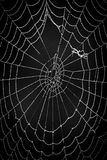 Cobwebs on a natural background. Blac and white Cobwebs on a natural black  background Royalty Free Stock Photo