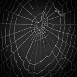Cobwebs on a natural background. Black and white Cobwebs on a natural black background Royalty Free Stock Photography