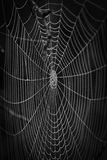 Cobwebs on a natural background. Black and white Cobwebs on a natural black background Stock Photography