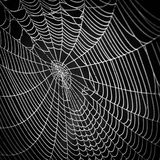Cobwebs on a natural background. Black and white Cobwebs on a natural dark background Royalty Free Stock Images