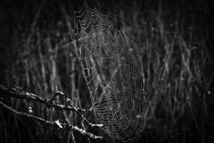 Cobwebs on a natural background. Black and white Cobwebs on a natural dark  background Stock Photo