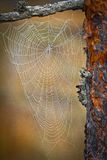 Cobwebs on a natural background. Cobwebs on a natural colored  background Royalty Free Stock Image
