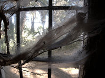 Cobwebs on old window. Cobwebs or spiderwebs on window of old building Stock Photo