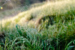 Cobwebs in the rays of dawn Stock Image