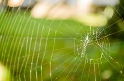 Close-up of spider web on plants Royalty Free Stock Photography