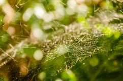 Close-up of spider web on plants Royalty Free Stock Photo