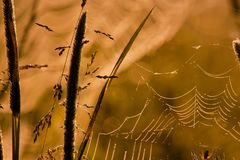 Cobwebs at sunrise. Grass at sunset with spider webs with nice blurring in the background Royalty Free Stock Photos