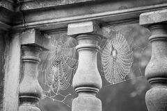 Cobwebs. Suspended from an ornate wall covered in morning dew in black  and white Stock Photos