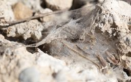 Cobwebs on the wall. Photo of an abstract texture Stock Image