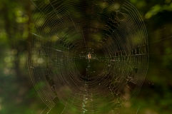 Cobwebs in the woods in the summer. The spider in the center of the web with a blurred background Royalty Free Stock Photography
