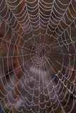 Cobweb covered with dew Stock Images