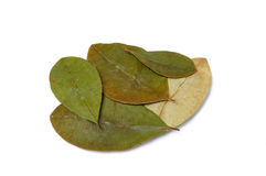 Coca. Leaves on white background Stock Images