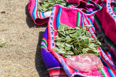 Coca Leaves Royalty Free Stock Photos