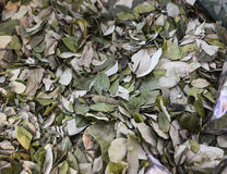 The coca leaves for sale Royalty Free Stock Image