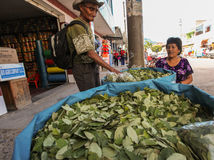 The coca leaves for sale Stock Photography