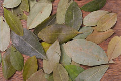 Coca Leaves on wood. En table stock image