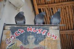 Coca Museum i La Paz Arkivbild