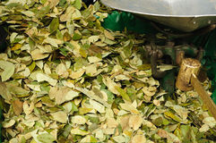 Coca for sale. Close up of coca leaves for sale Stock Image