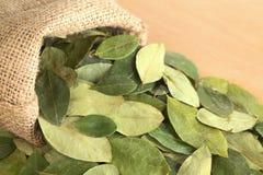 coca torkade leaves Arkivbilder
